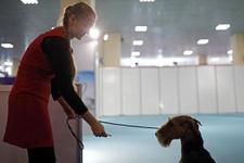 118 kiloluk dev mastif fuarın ilgi odağı oldu