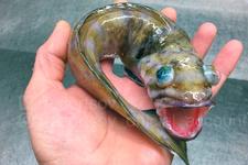 Denizin derinliklerinden ürkütücü yaratıklardır