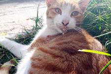 Antalya'da kedileri tavuk eti ile zehirlediler