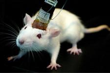 Hayvanların da beyni yoruluyor inanılmaz araştırma