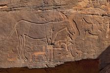 Tarihin en eski köpek çizimleri bulundu