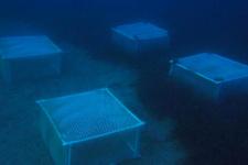 Foça'nın deniz çayırlarına bakın gözlem altına alındı