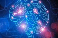 Zeki insanların beyin bağlantıları normal beyinden daha etkin