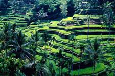 Endonezya'da 100 yılda ilk defa büyük maymun keşfedildi