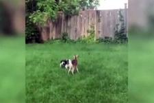 Köpeğin yavru ceylanla arkadaşlığı