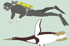 İnsan boyutunda penguen fosili bulundu