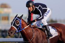 Reza Zarrab'ın atı kaderine terk edildi! Seyis kan ağlıyor