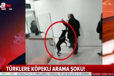 Hollanda'da yine skandal: Türklere köpekli arama şoku