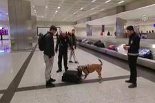 Son misilleme...Hollanda'dan gelen yolcuların valizlerine köpekli arama