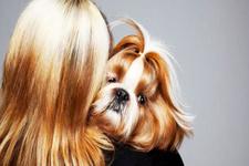 Köpekler sahiplerinin kişiliklerini kopyalıyor