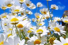 Baharın müjdecisi ilk cemre ne zaman düşecek?