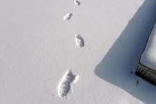 Hırsızı kardaki ayak izi ele verdi