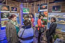 Sualtının büyülü dünyası Deniz Müzesi'nde