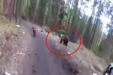 Yarışta sporcuyu ayı kovaladı
