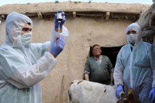 Kenya'da şarbon virüsü rastlandı