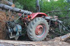 Karabük'te üzerine ağaç devrilen işçi hayatını kaybetti