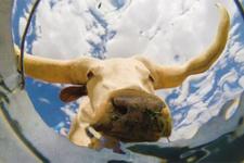 Kovanın dibinden hayvanların su içme anları