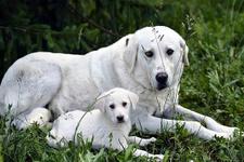 Köpeklerin dost canlılığının nedeni genetik değişiklik