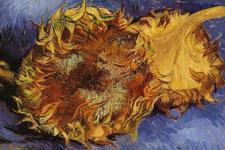 Facebook'ta, Van Gogh'un