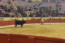 Boğa matadorun canını aldı