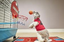 Dünyanın en iyi basketbolcu tavşanı