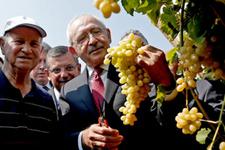 Kılıçdaroğlu 'üzüm mitingi' öncesi üzüm kesti