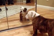 İlk defa ayna gören sevimli yavru köpek
