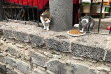 Yasaklı mahallere giden hayvanlar için vatandaşlar harekete geçti
