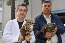 Tedavileri tamamlanan hayvanlar doğaya salındı