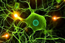 Sıradan deri hücresinden doğurgan kök hücre üretildi