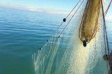 Denizden 14 bin metrekare hayalet ağ çıkarıldı