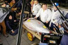 Japonya'da yılın ilk orkinosu 320 bin dolara satıldı