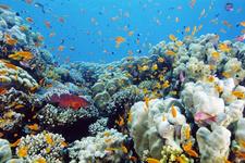 Mercan resifleri ağarma nedeniyle yok olmak üzere