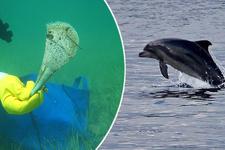 Deniz canlıları böyle koruma altına alındı!