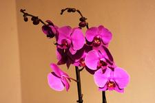 Marmaris Orkide Günleri ile renkleniyor