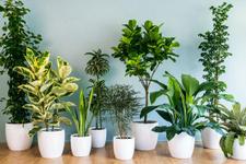 Bitkilerin kış bakımı nasıl yapılır?