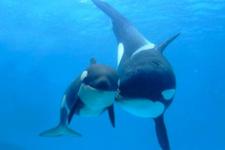 Bilim insanları balinaların uzaydan görülebildiğini söyledi!