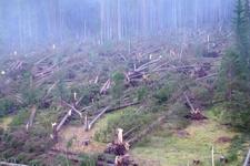 Avrupa'yı fırtına vurdu 20 kişi öldü 14 milyon ağaç devrildi...