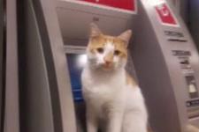 ATM'de bekleyen sevimli kedi ilgi odağı oldu