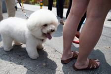 Çin'de köpek gezdirme yasağı