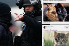 Strazburg saldırısı operasyonuna kedili destek