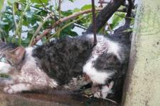 Bacağına demir çubuk saplanan kediyi böyle kurtardılar!