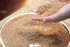 Binlerce yıllık 'ıza buğdayı'nın coğrafi işareti alınacak