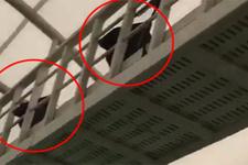 Fenerbahçeli taraftarlarının üstüne hoparlör koydular