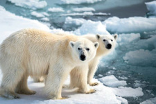 Kutup 25 derece ısındı, Avrupa dondu