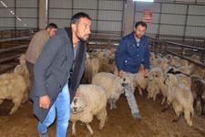 Köyüne geri dön 300 koyunu kap! Artı maaş da var