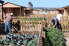 Emeklilerin rüyası Hobi Bahçeleri