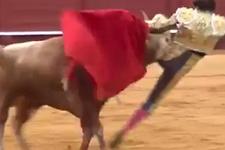 Kızgın boğa matadoru hakladı