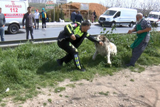 Tutanak tutmaya giden polise köpek saldırdı!