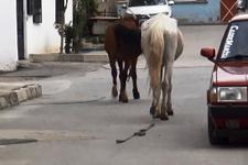 İplerinden kurtulan atlar trafiğe daldı